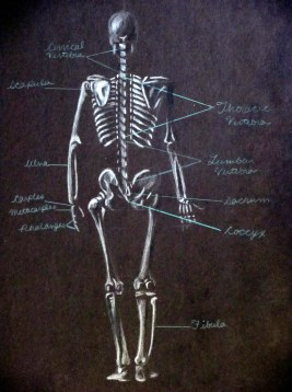 Skeleton Diagram - Back